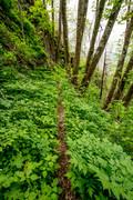 Rough Creek Trail 5-9-19