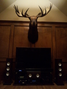 Big Moose Man Cave