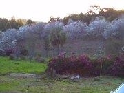 Cerejeiras- Frei Rogério SC