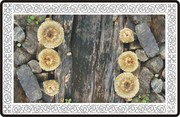 Cogumelos , madeira e pedra