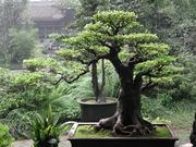 the-best-bonsai-caring-ways