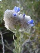 Flor nativa