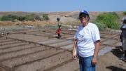 irrigação por sulco fechado