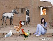 Colagens da Solange