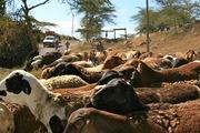 Exploring around Naivasha, Kenya 2010