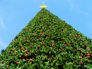 Christmas in Delray Beach - 100 Foot Christmas Tree