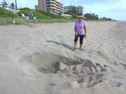 First time a yankee sees a turtle nest.