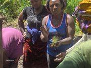 June 2014: Farmers provide training on transplanting