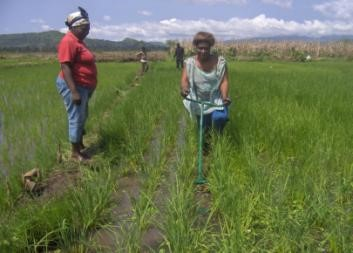 July 2014: Using the weeder