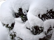 snow stuff