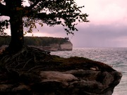 Chapel Beach Tree, Pictured Rock National Lakeshore, MI