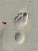 My Left Foot
