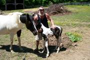 Dennis with Ribbons and her new baby colt, Pepper.