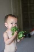 mmm, baby spinach.