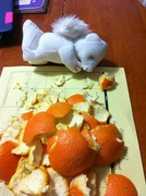 The little bear is praying for some fruit