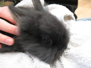Beautiful and Fluffy, Rescue Bunny