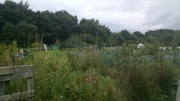 English allotments are bliss!