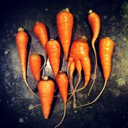 Cutest Carrot Collection Ever!