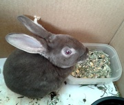 jake our new pet..um yea its a wabbit lol