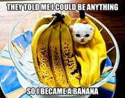 No Kitten, a Banana
