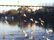 birdsin flight
