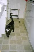 Freyr the Cat 1992 - 2010
