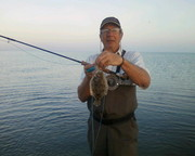 flat fish on fly