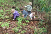 Infants and toddlers exploring the woods.