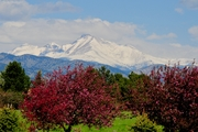 Crabapples and Mt. Meeker