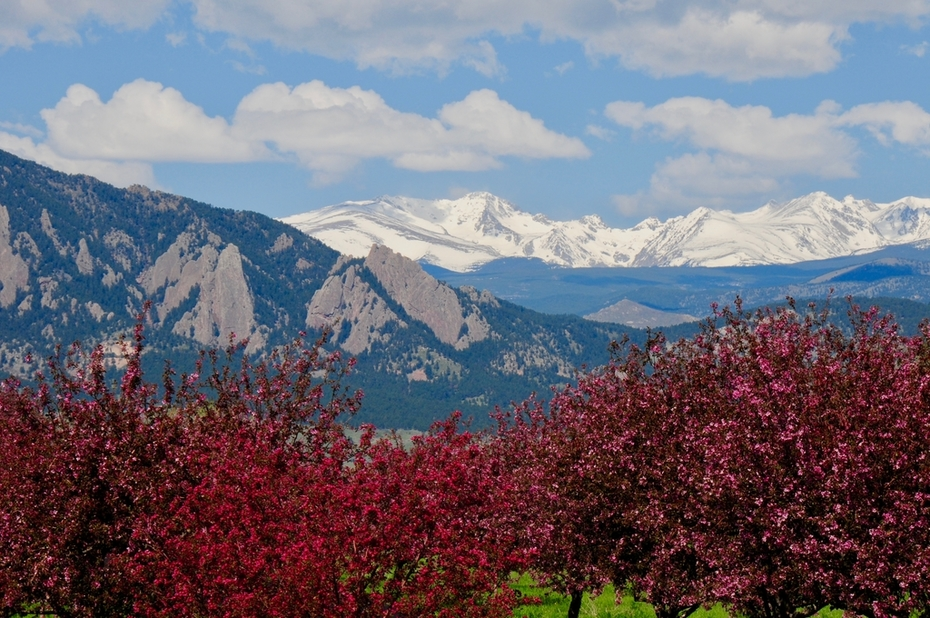Indian Peaks and crabapples