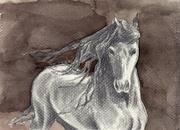 horse 090811