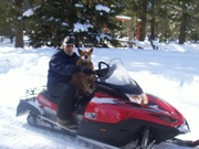 See - Dogs can drive too! - By Roxanne Skidmore