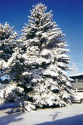 Fridged Frost - Idaho - By Roxanne Skidmore