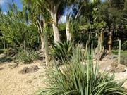 DesertPlants