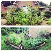 My little city garden