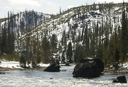 Nature's cycle of destruction & renewal- Yellowstone, April 2014