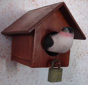 Making the Birds Safe