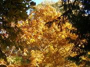 Itt van az ősz,itt van újra...