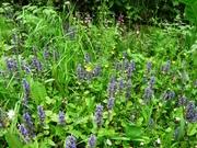 Az erdő virágoskertje 2