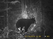The bear that got away!!!