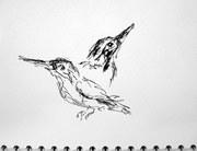 Sarah O'R's Sketches