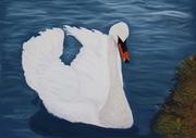 Sallins Swan
