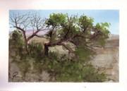 Tree watercolor - ACUARELA DE ARBOL  en el Navazo