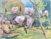 Magnolias at Farmleigh.  1stApril 2017
