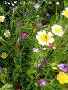 flowers in tirol