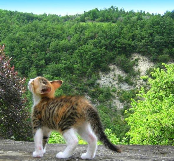 kitten1316