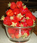 strawberries May 2016