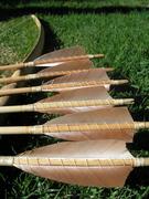 sitka spruce arrows 01
