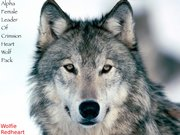 2 Wolfie Redheart Alpha Female Of Crimsion Heart Wolf Pack
