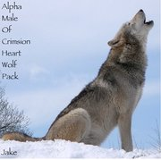 3 Alpha Male Of Crimsion Heart Wolf Pack